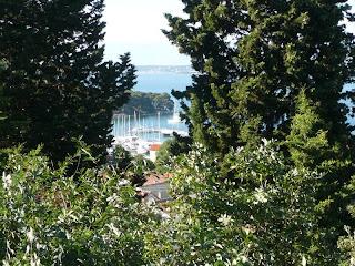 Lo scorcio sul mare attraverso la vegetazione rigogliosa su tutta l'isola di Ugljan (Ugliano)
