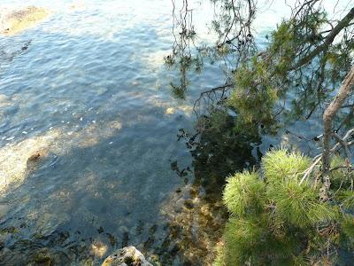 le fronde del pino toccano il mare