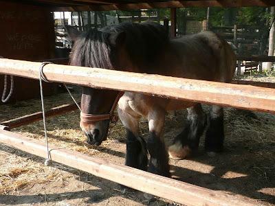 Agrifiera Cavallo