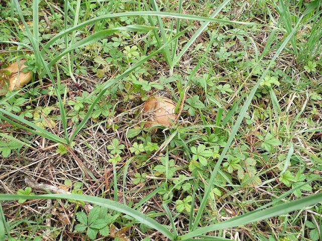 funghi toscana