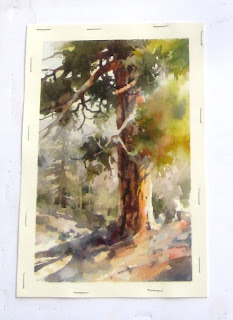 Roland Lee plein air watercolor study of a Ponderosa Pine