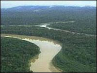 Estudo diz que rebanho bovino na Amazônia dobrou