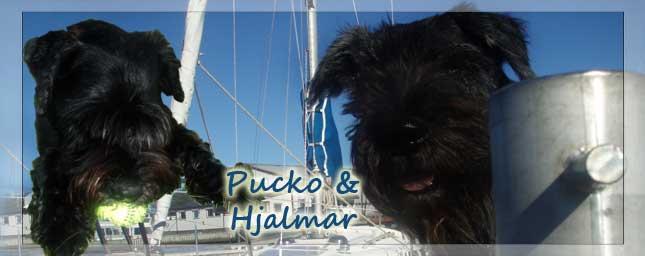 Hundliv med Pucko och Hjalmar