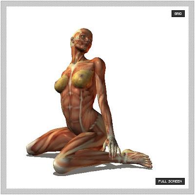 Posemaniacs :: anatomía humana   TRECOOL Magazine :: tecnología