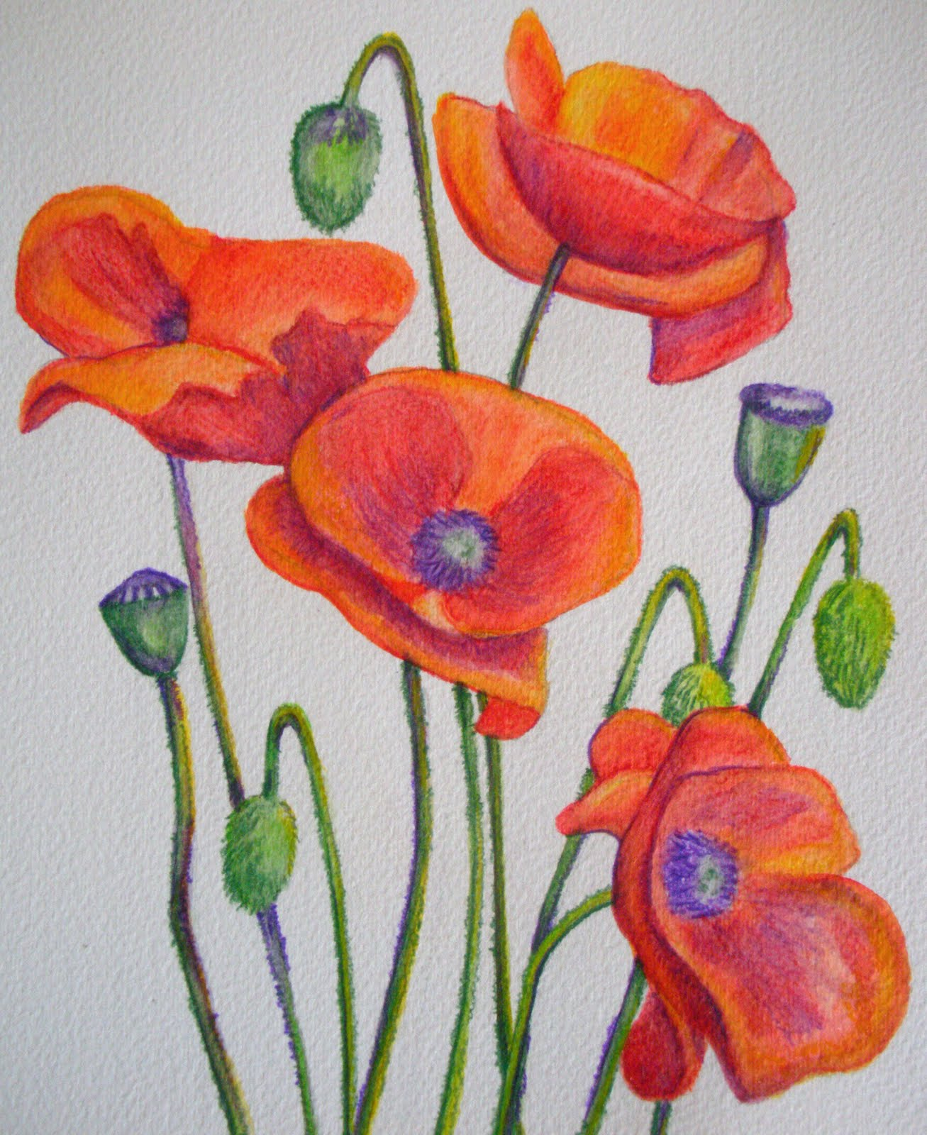 Watercolour Flowers: Wild Flowers DVD with Sheila Southwell, Art