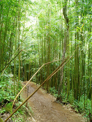 Bamboo (click to enlarge)