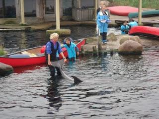 blaas gat dolfijn
