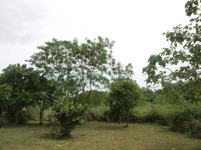 http://2.bp.blogspot.com/_X3hI3hadKJ0/TM5nXYVctkI/AAAAAAAAERE/05laMqd_mqk/s1600/ayala+land2.JPG