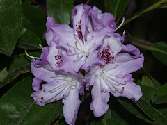 The Rhododendron List