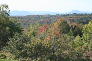 Knit Jones Vermont Foliage