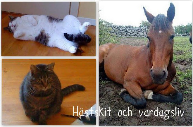 Hästskit & Vardagsliv
