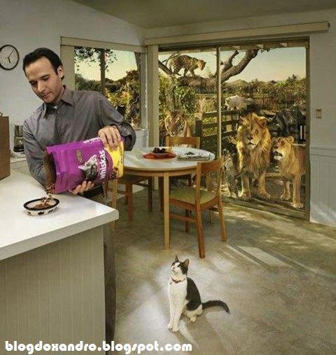 [comida-para-gatos.jpg]
