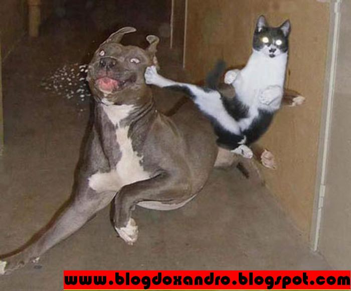 [gato+ninja.JPG]