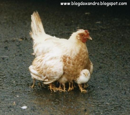 [pes-de-galinha.jpg]