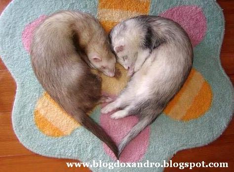 [amor-dos-animais.jpg]