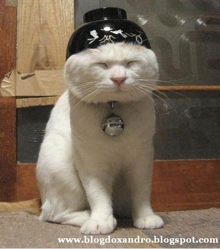 [gato-chines.jpg]