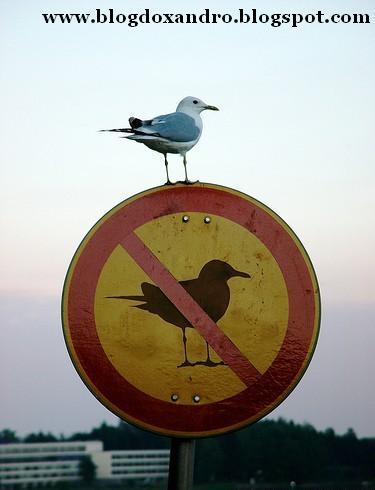 http://2.bp.blogspot.com/_X643PcxIPVk/SwhEw_EgMoI/AAAAAAAAeMo/Tlmwj6kKiTc/s1600/passaros-proibidos.jpg