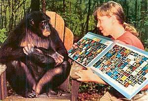Savage-Rumbaugh Power Point | Chimpanzee | Language ...