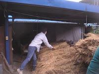 脱穀⑥脱穀する人に稲穂を運ぶ田村さん