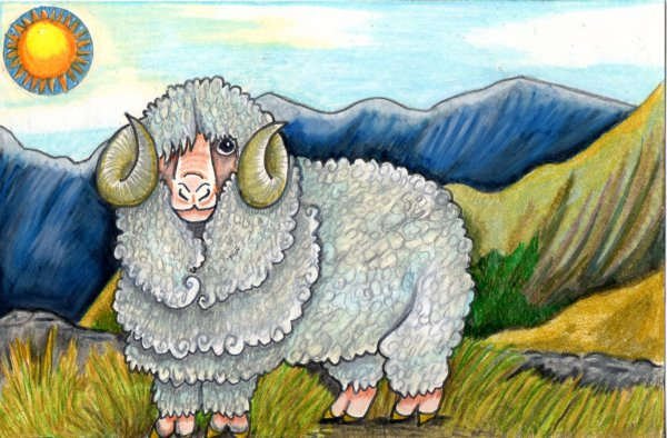 the merino sheep is a breed of