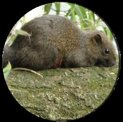 白石湖的松鼠