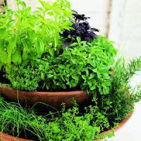 Herb Garden Picture