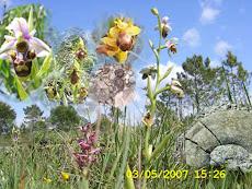 Orquídias, amonites e destruição