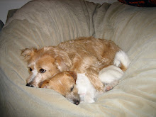 Sadie & Boone