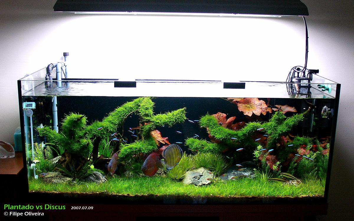 Lacerta Forum  u2022 Bekijk onderwerp   Nano aquarium