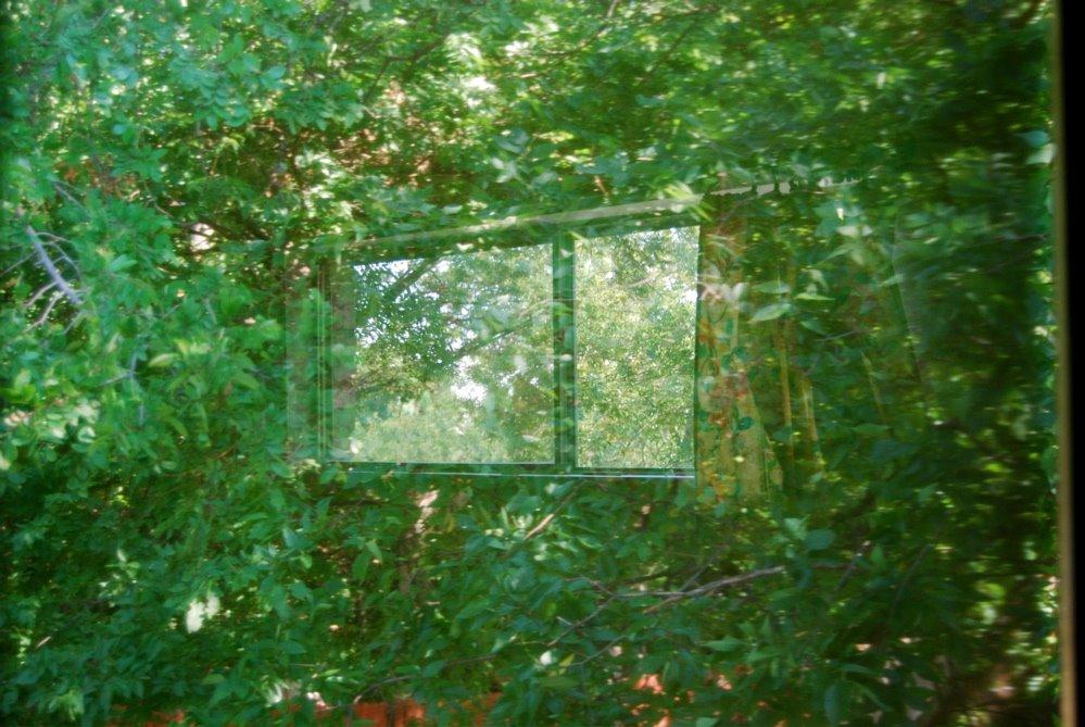 [woods+window]