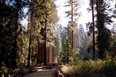 Sequoia National Park, California, Oct. 1995