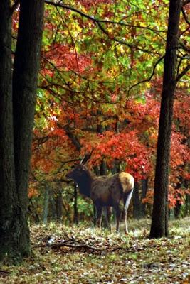 Lone Elk State Park Missouri, Oct. 1992