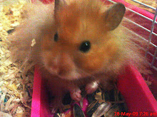 my little hamster..