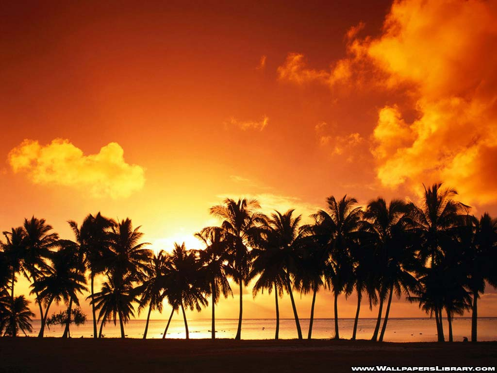 http://2.bp.blogspot.com/_XELK_ndhHWM/SxVyHeOJbTI/AAAAAAAAAUs/zqRMs4tTkuA/s1600/row-of-palm-trees-wallpaper.jpg