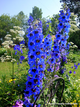 Delphinium and Valerian