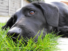 My Dog :)