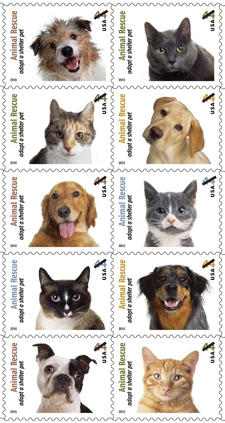 adopt a shelter pet stamps essay Adopting a pet is a huge responsibility, but it is as well an amazingly enjoyable, pleasing experience to be successful in such an undertaking one has to take into account some significant factors number one factor is a place from which you are to adopt your future pet.