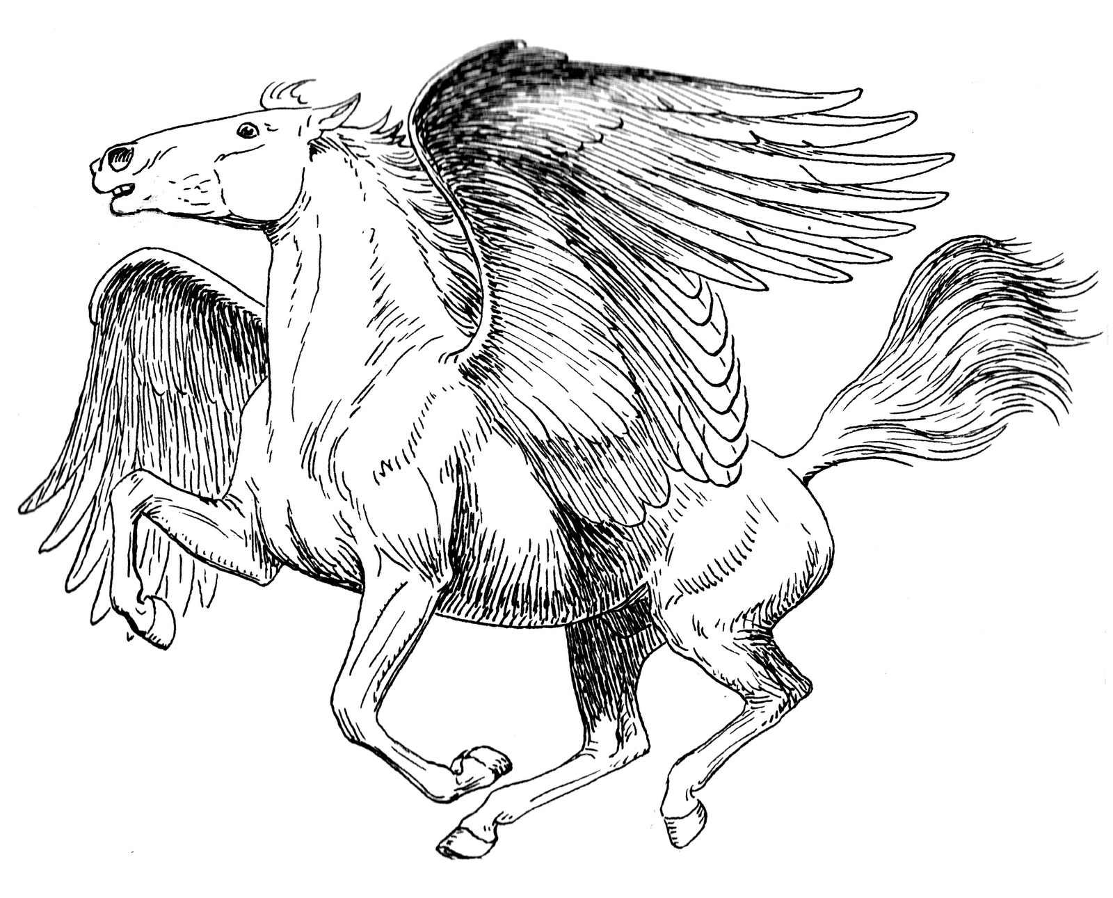 Mythological beasties and co pegasus for Coloring pages of pegasus