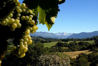 Jurançon landscape with vineyards and the Pyrenees mountains