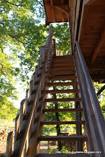 Stairs to tree house