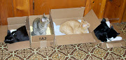 Okay, Cats, LINE UP, PICK A BOX!