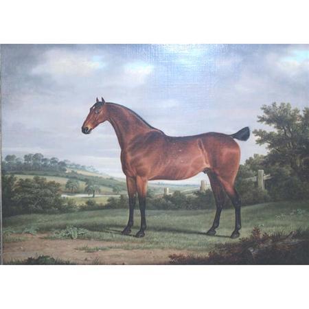 [Racehorse]