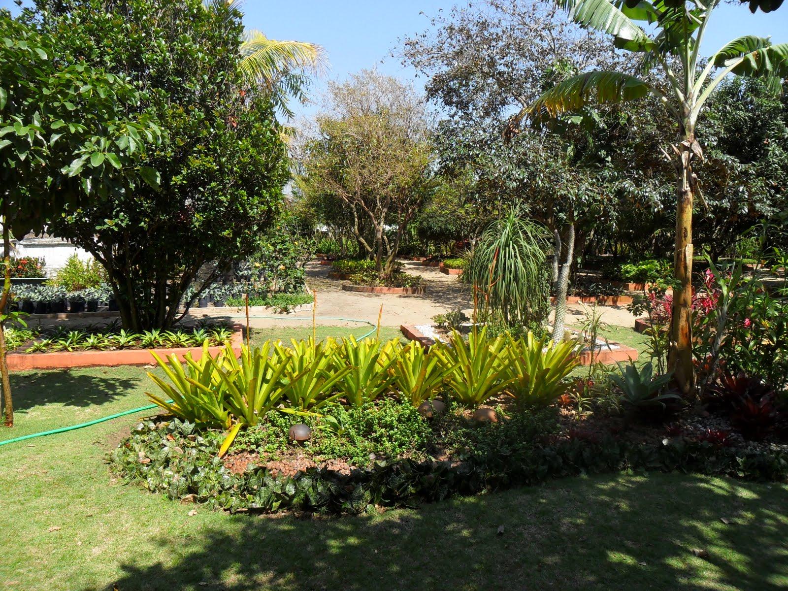 mini jardim botanico:Foto: Explosão de cores verdes ! Crédito da foto: Andre Pinto. Foto