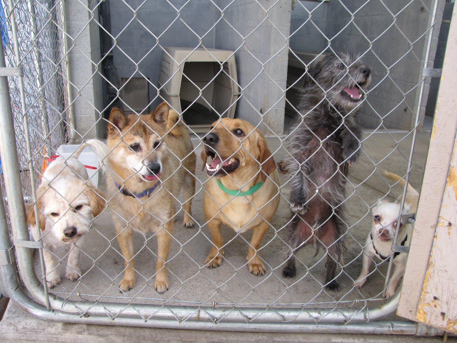 selecting the right rescue dog from a shelter