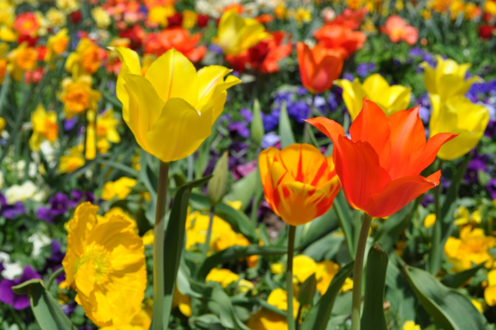 Images Of April Showers Bring May Flowers Up Bold Big