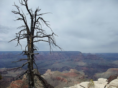 grand canyon, dead tree view, color rocks