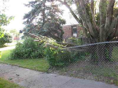safely remove a fallen tree from a fence