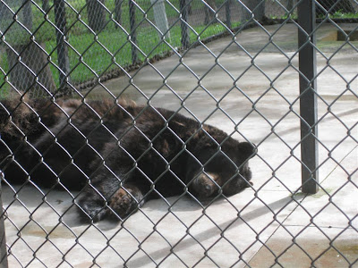 the bear store, m-55, sleeping, black bear