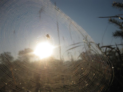 spiders web, sun light, close up, shadow