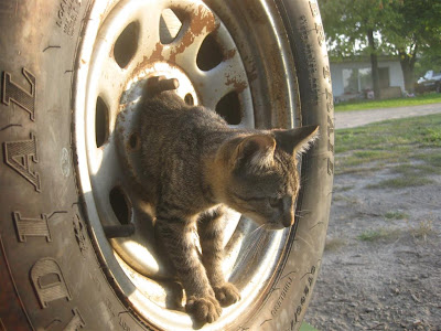 stray cat in a spare tire, trailer, stuck